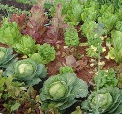 vegetable-garden.png