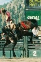 1998 Inductee Animal Kingsway Skoal.jpg