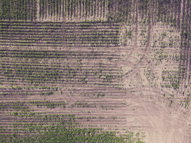 Get a better view of your crops. Drone software stitches together hundreds of photos of your fields so you can see all your land in one high-definition orthomosaic map.