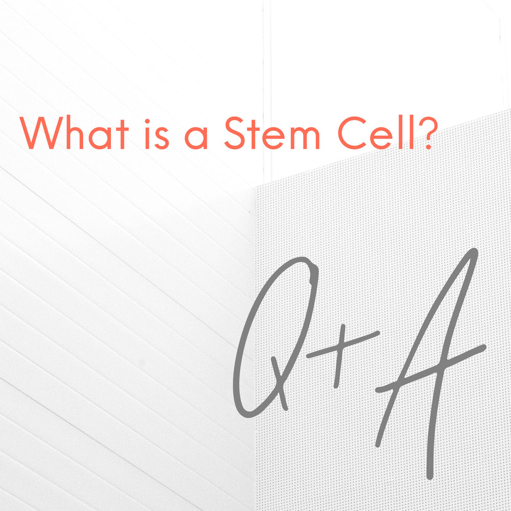 What is a Stem Cell.jpg