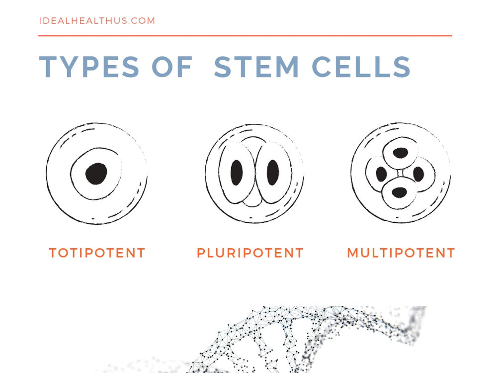 Types of Stem Cells.jpg