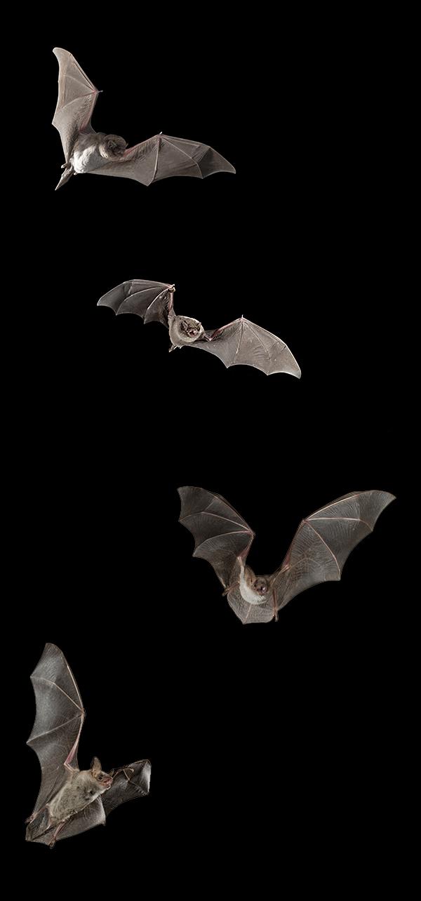 NRG-Why-Bats.jpg
