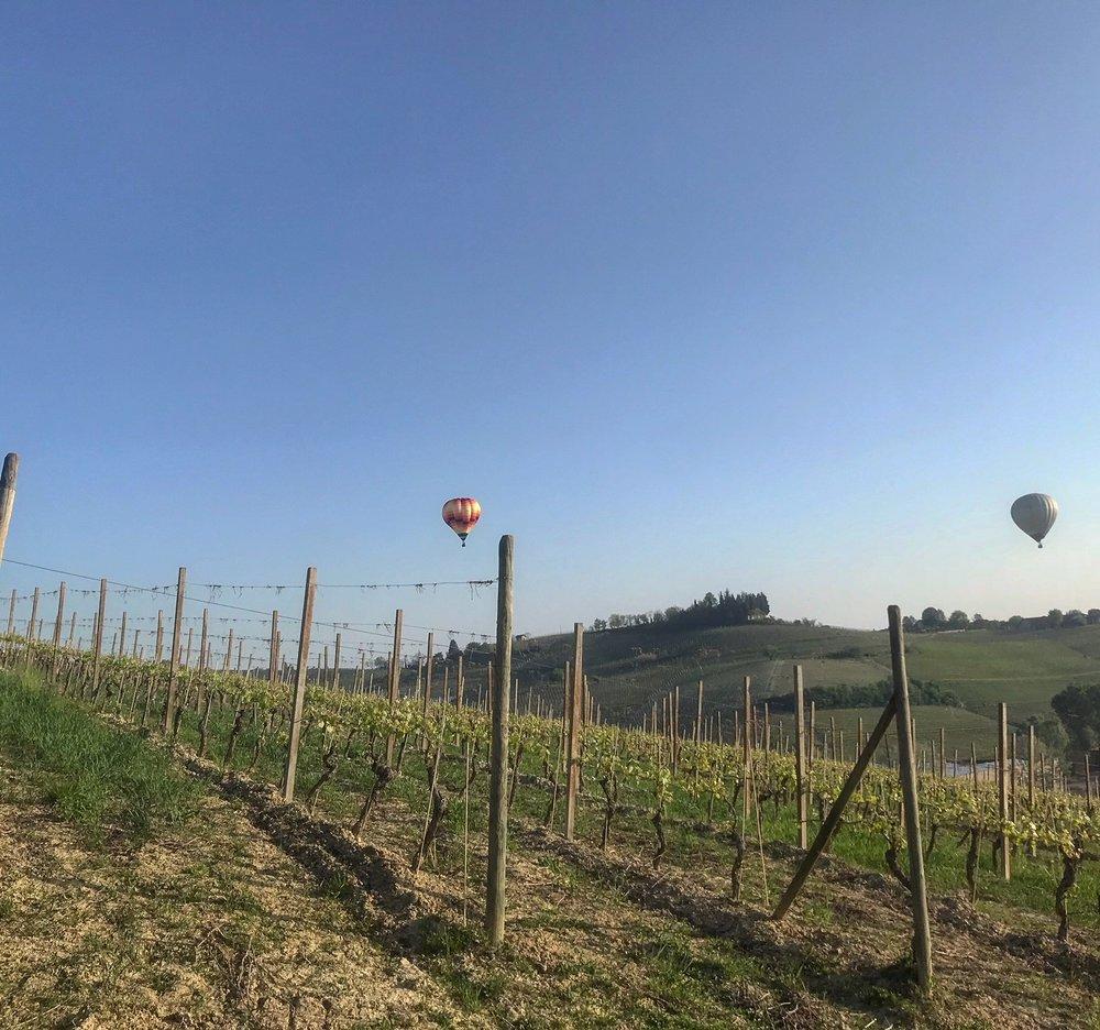 vineyards_sunny.jpg