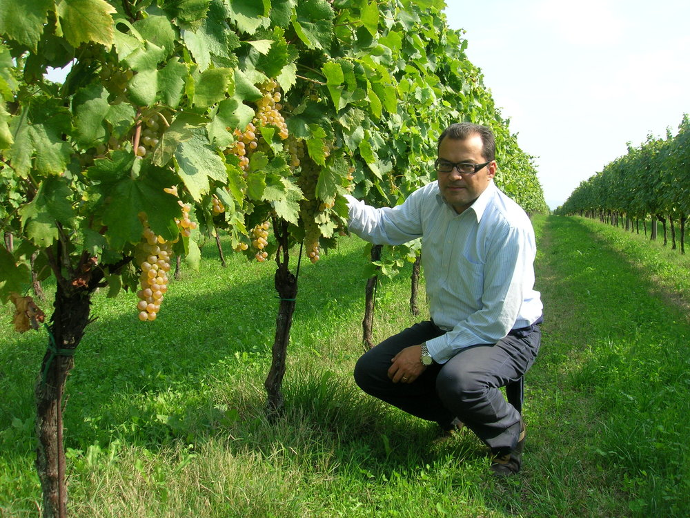 a La Cappuccina Sisto nel vigneto in the organic vineyard.JPG