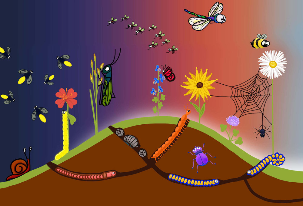 jolie-canoli-bugs.jpg