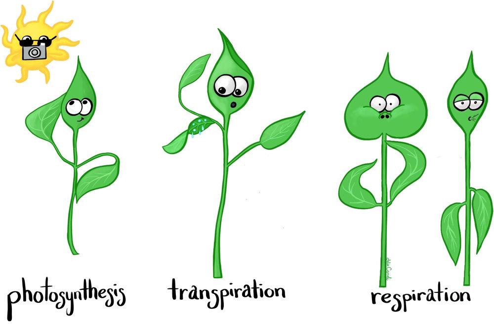 plant-systems.jpg