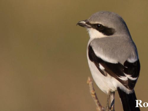 a tiny bird sits on a twig
