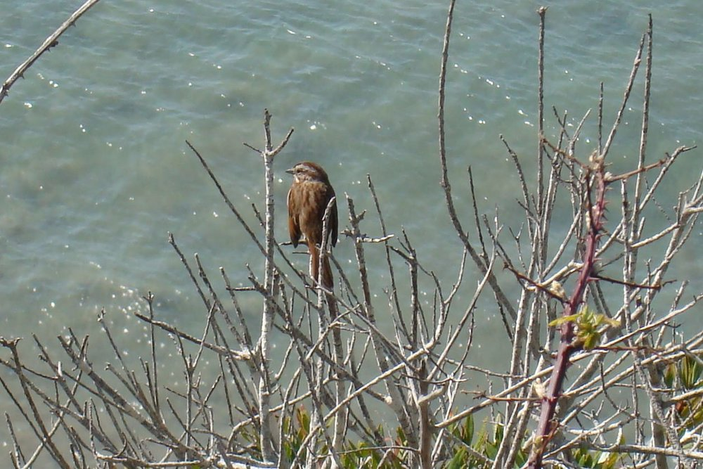 A small brown bird sits on a branch by the river.