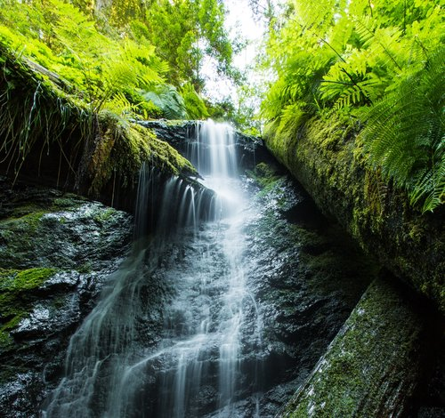 A small waterfall spills over a rocky ledge surrounded by moss and ferns.