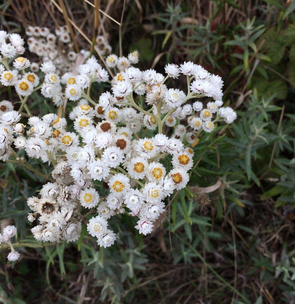 Un Named Flower