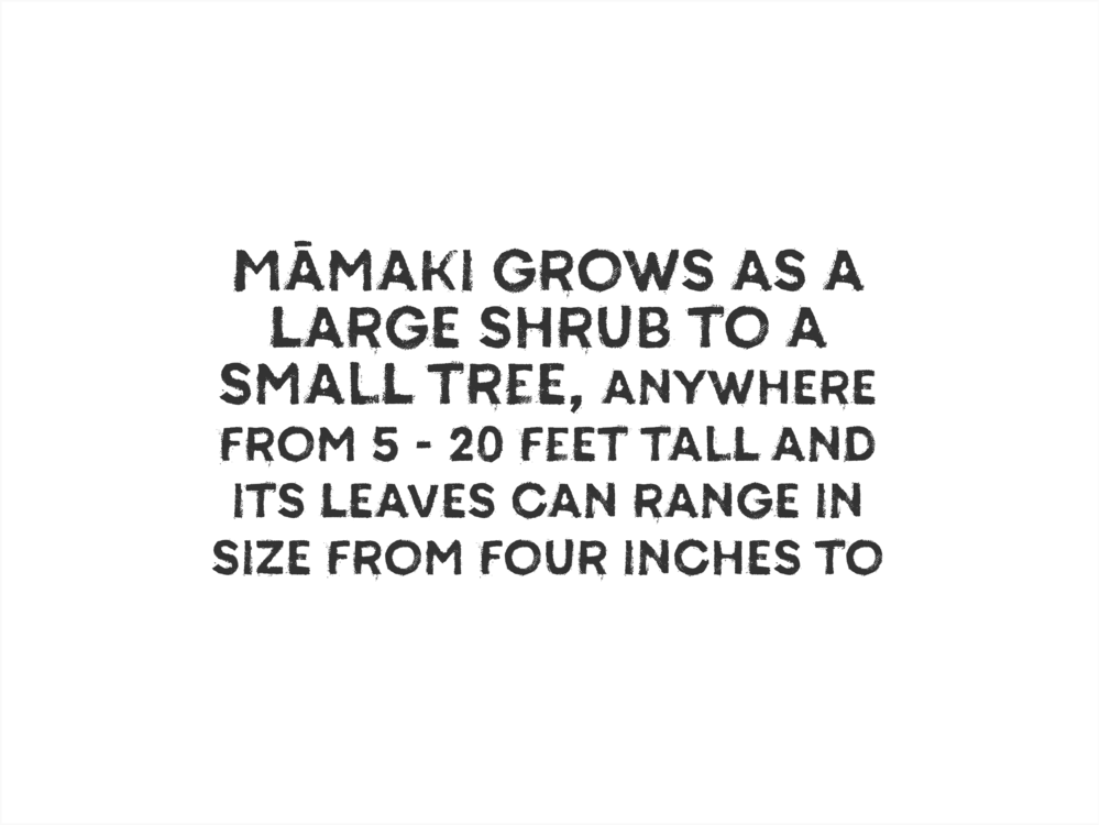 Mamaki_Facts_Gallery-03.png