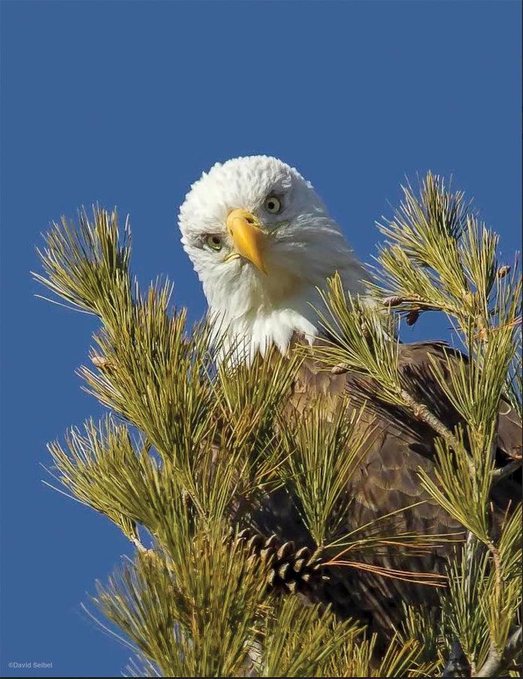825649e683b Prairie Wings 2018 — Audubon of Kansas