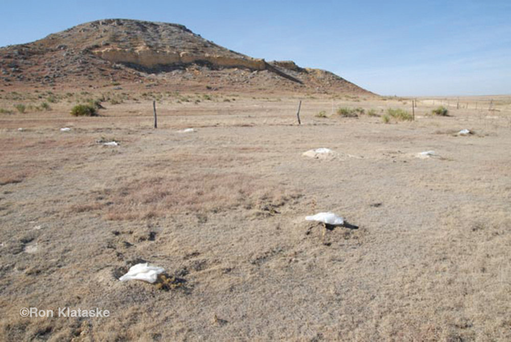 Plastic bags filled with sand were used to seal burrows when Phostoxin was used to kill prairie dogs (and everything else) in burrows on the Haverfield Ranch in 2007. To preclude a court injunction the exterminator hired by the Logan County Commission came on the property on Labor Day Weekend when the courts were closed.