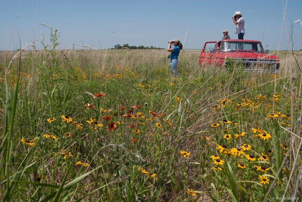 Wildflowers at Hutton Niobrara Ranch Wildlife Sanctuary. Photo by Ron Klataske