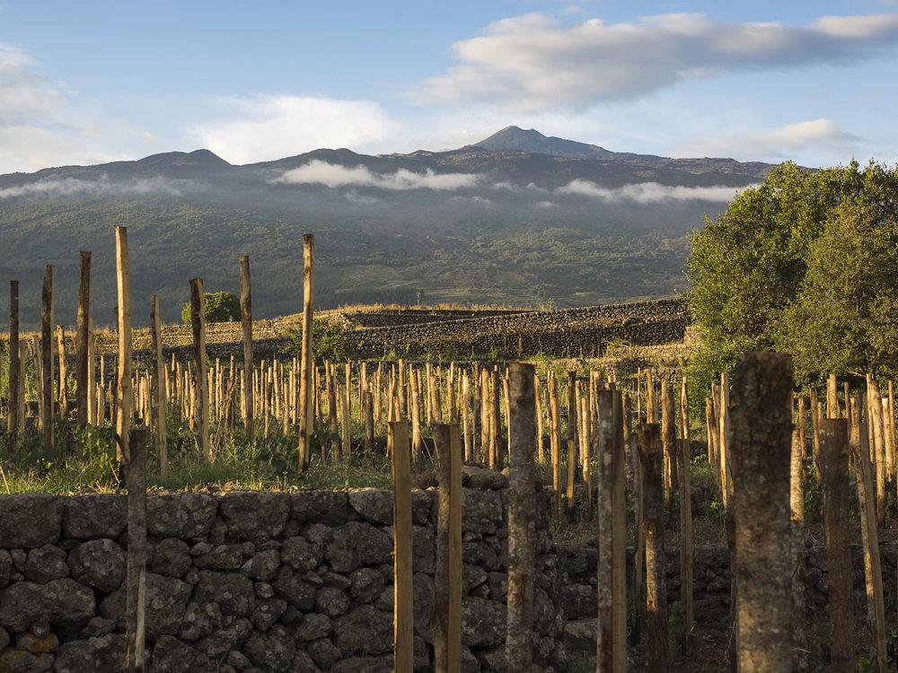 Copy of Etna
