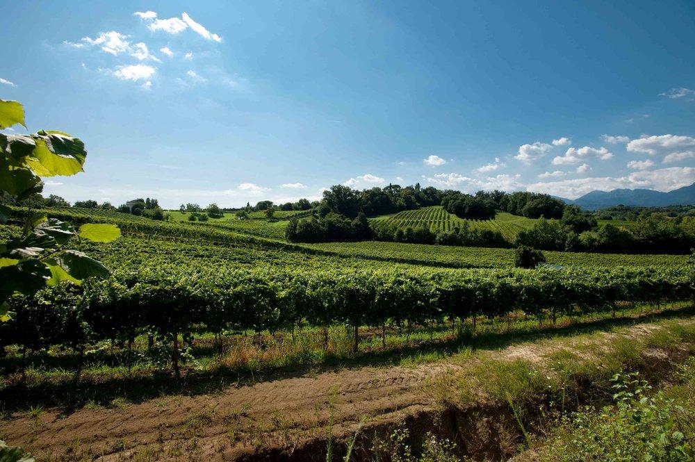 Conegliano_Monticella's-vineyards.jpg