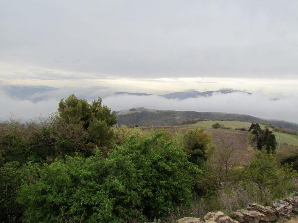 foggy vineyard - lz pic.JPG