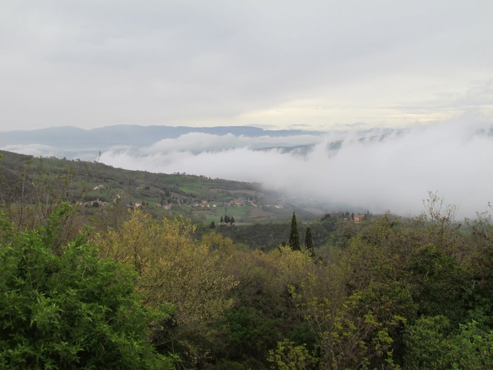 foggy vineyard 2 - lz pic.JPG
