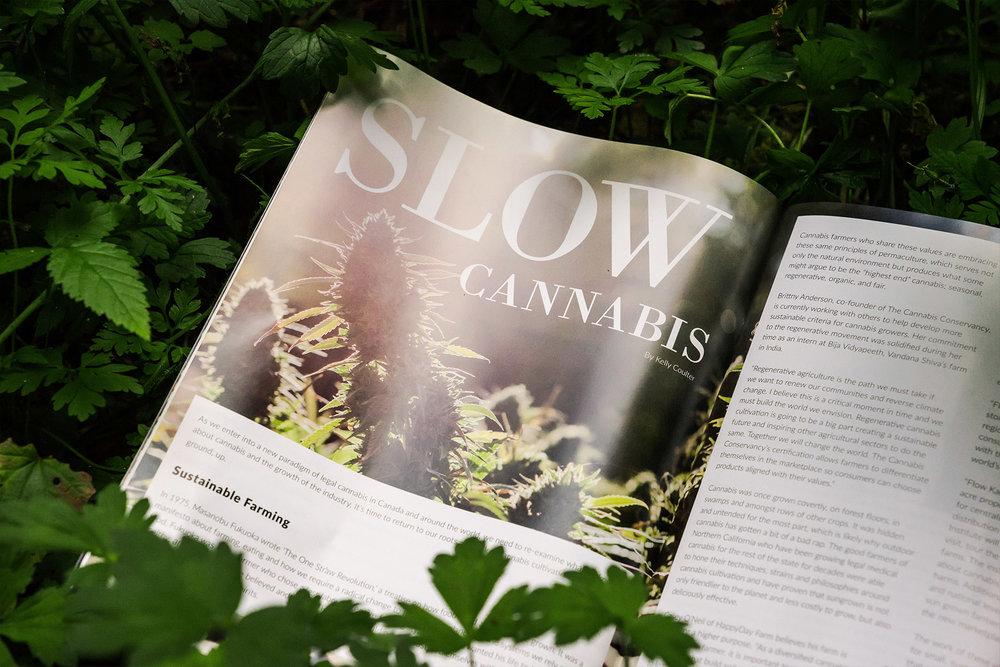 cannabis-magazine-design-1.jpg