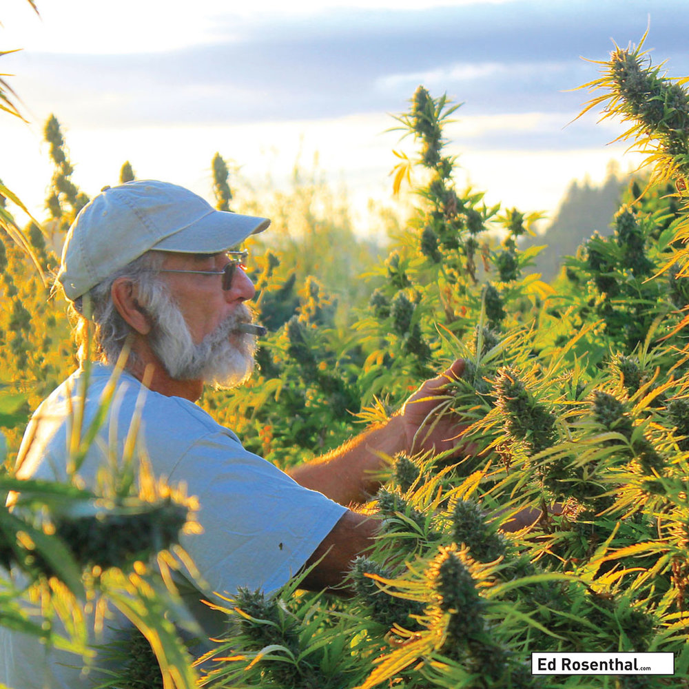 Sohum Seeds  - Photo Lawrence Ringo at work.