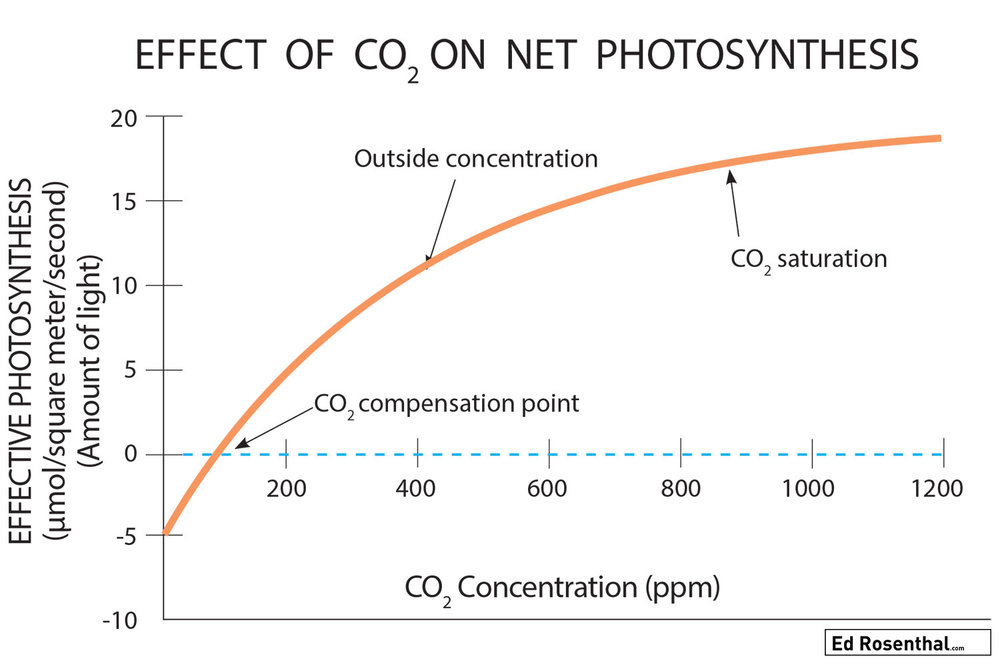 Effect-CO2-on-photosynthesis-in-cannabis-ed-rosenthal.jpg