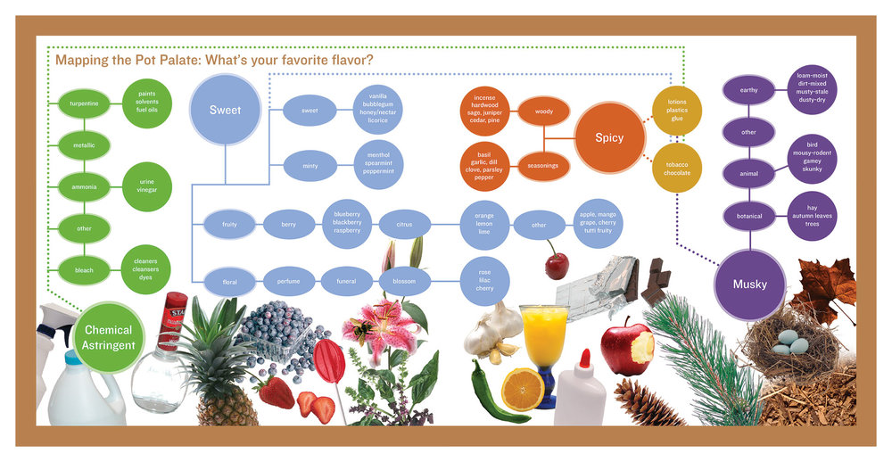 mapping-the-pot-palate-2.jpg