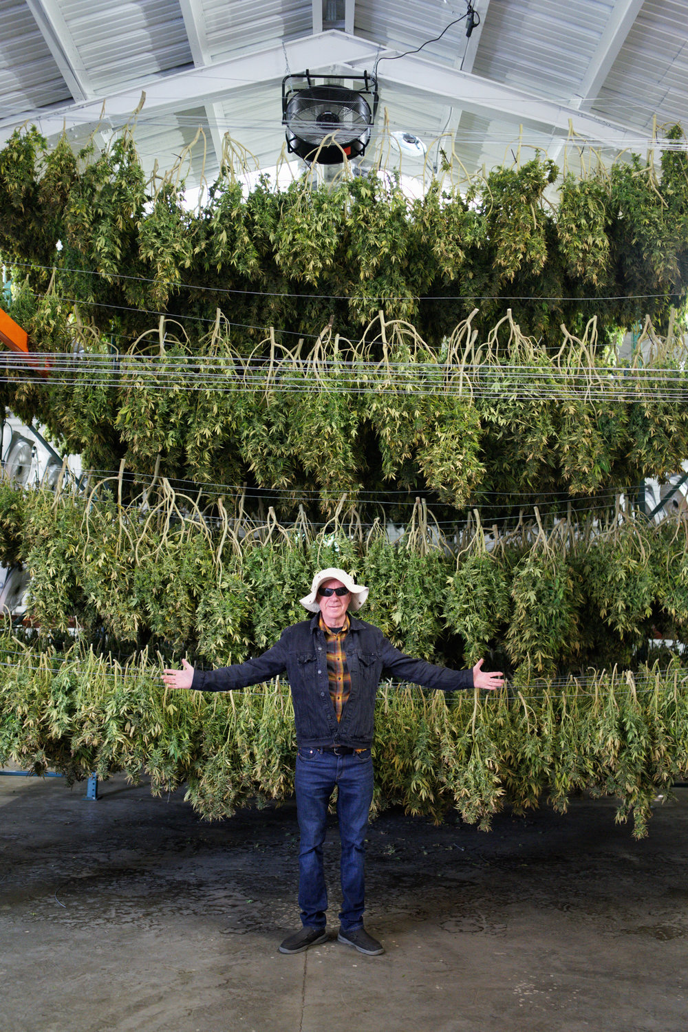 Ed Rosenthal in cannabis drying room.