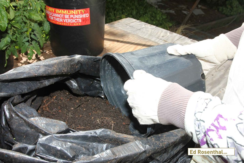 The compost process uses both bacterial and fungal decomposition as well as red worms, and sowbugs.