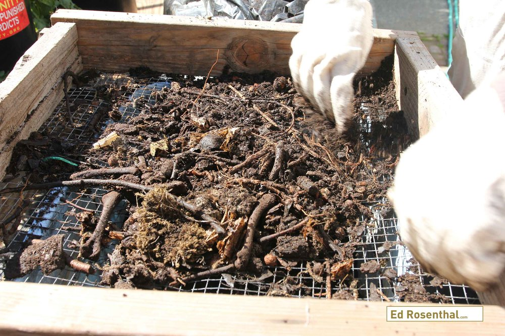 Making compost: Twigs and other partially composted material are returned to the bin for further decomposition. Any stray plastic or debris is removed.