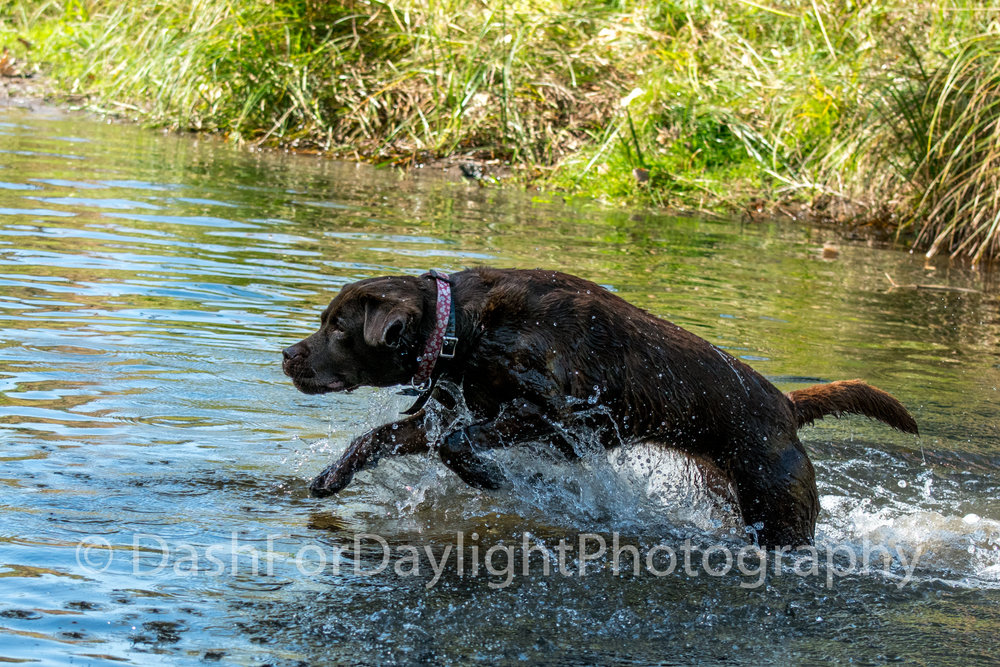 DSC_2094 Bounding Through a Stream