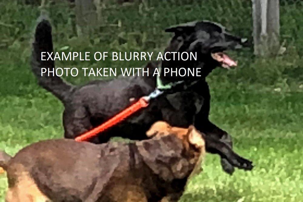 Running dog taken with $800 Phone in Burst mode at 15 yards
