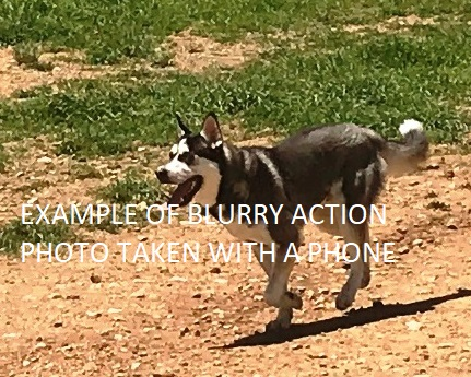 Running Husky taken with $700 Phone in Burst mode, at 20 yds