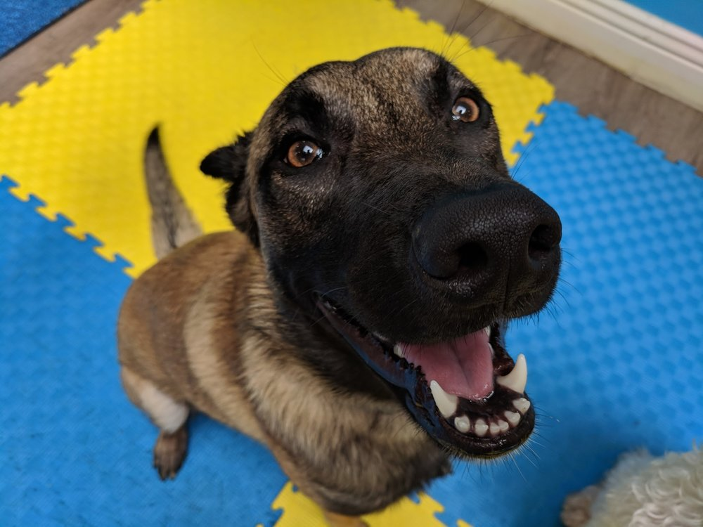 Safety Assessment Test - The SAT is an all-day evaluation of your dog. It includes a full day of daycare, assessing your dog's sociability with other dogs, friendliness with our staff and overall fit for our daycare.