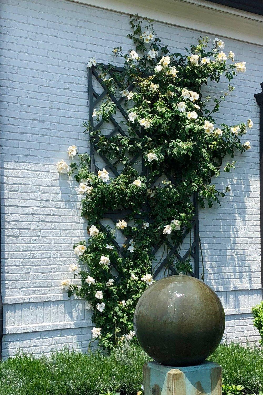 Garden+Trellis.jpeg