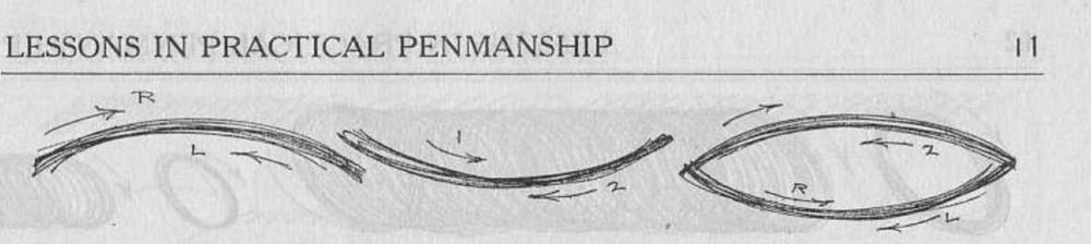 behrensmeyer arcs.png