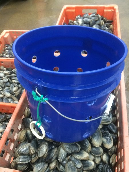 "Clam bucket - 3 gallon.  1"" holes.  An economical container for the starter clammer."