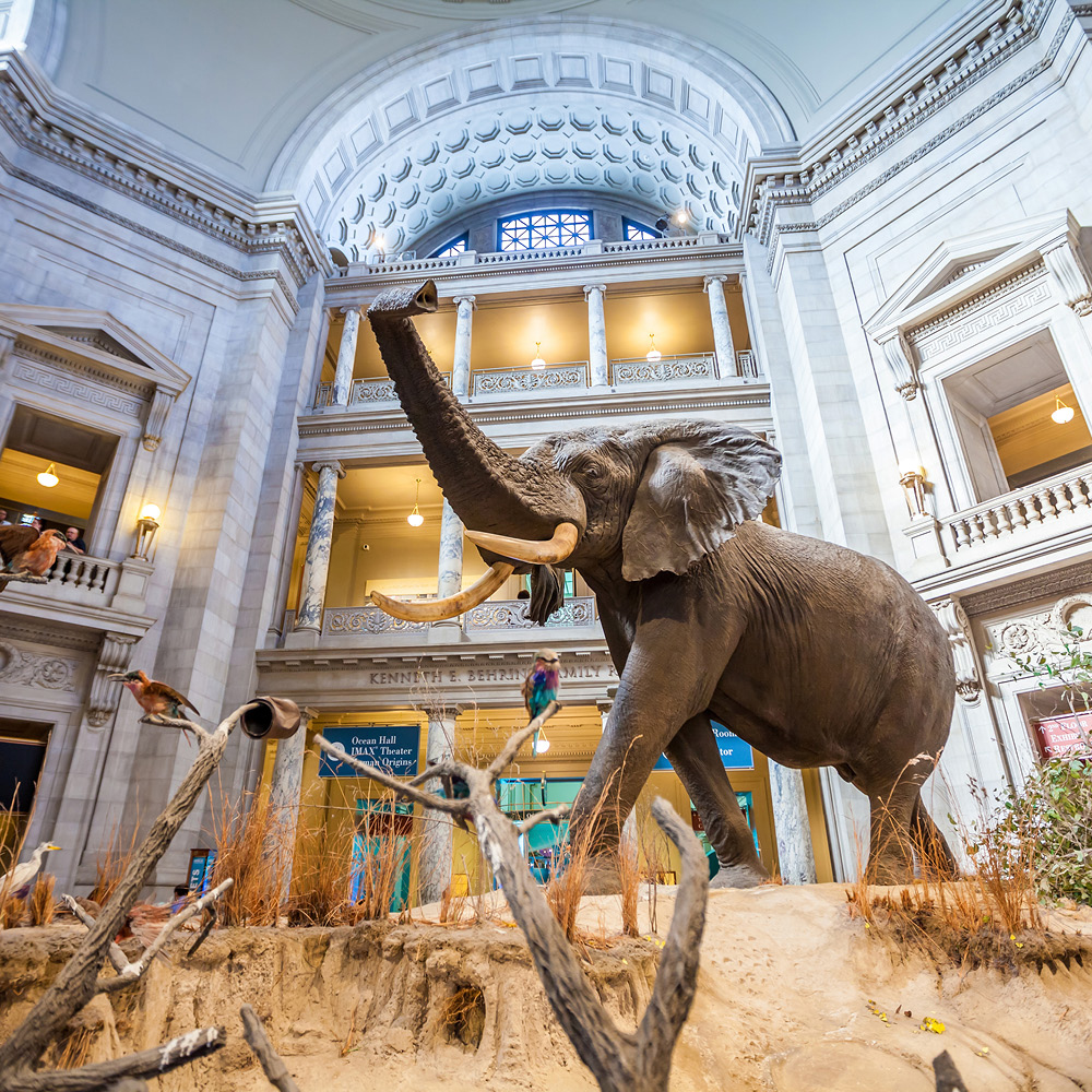 Artsmarketing Services will collaborate with non-profit organizations all across North America to provide the strategy for the public phase of your capital and endowment campaigns. Image of an elephant exhibit in a museum.