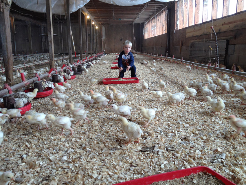 The first Organic flock, and Corwin's son, Colton. Like father, like son!