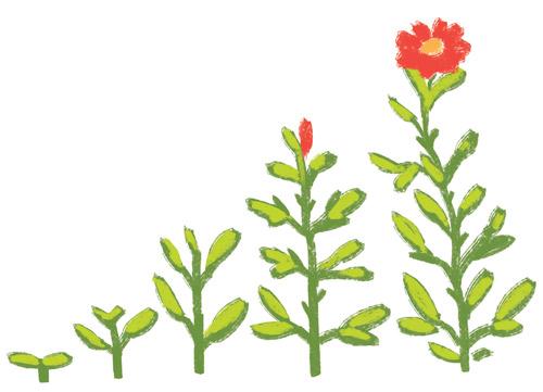 why-organic-flowers.jpg