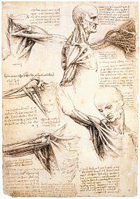 shoulder series exercises by madeline black