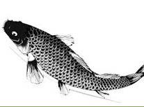 pilates fish primal