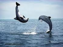pilates dolphins