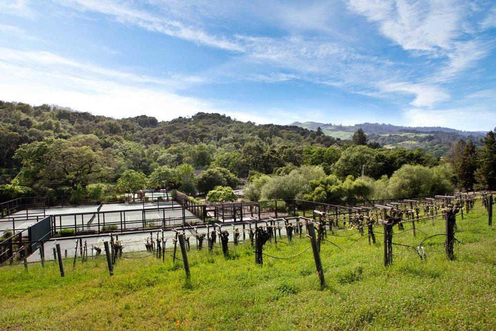 10 Franciscan - comminity vineyard.jpg