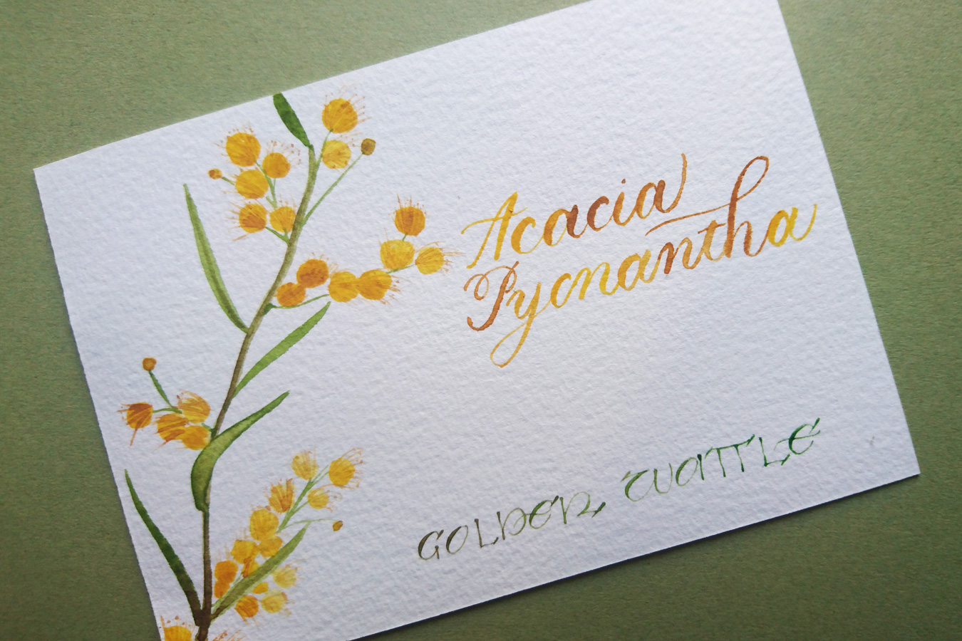 Thumbnail picture depicting the wattle giveaway prize, a hand lettered, hand painted A6 print
