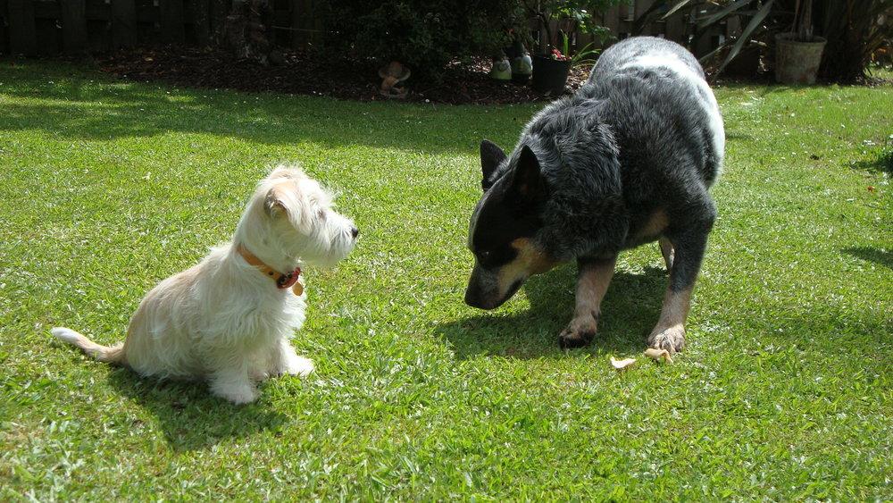 puppy meets dog.JPG