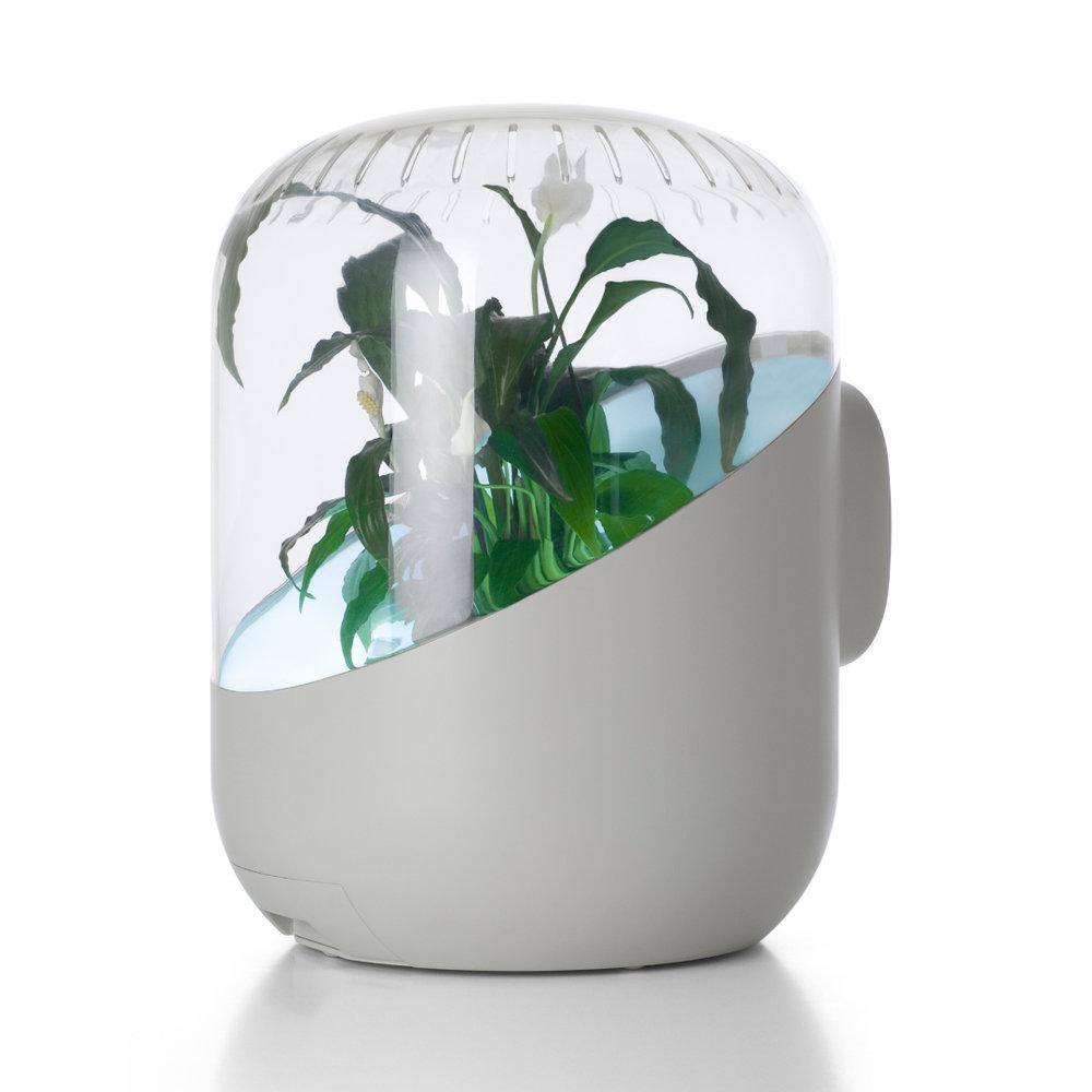 andrea-indoor-air-purifier.jpg