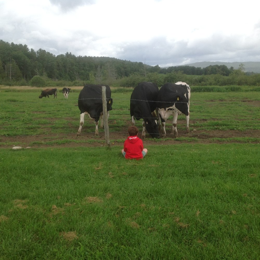 Friendly cows at my Vermont farm.