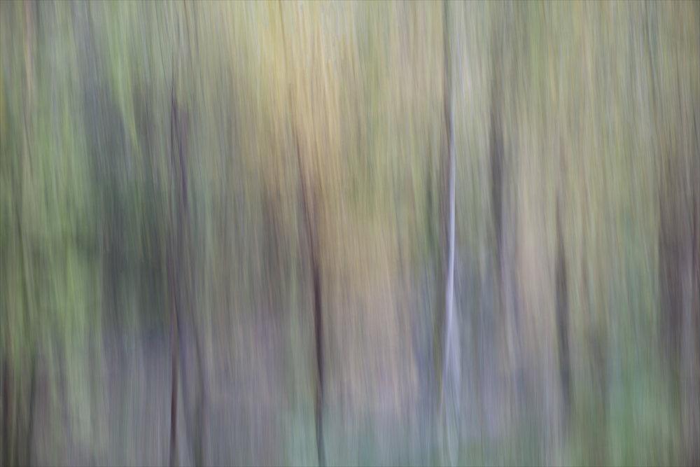 Woodland #1