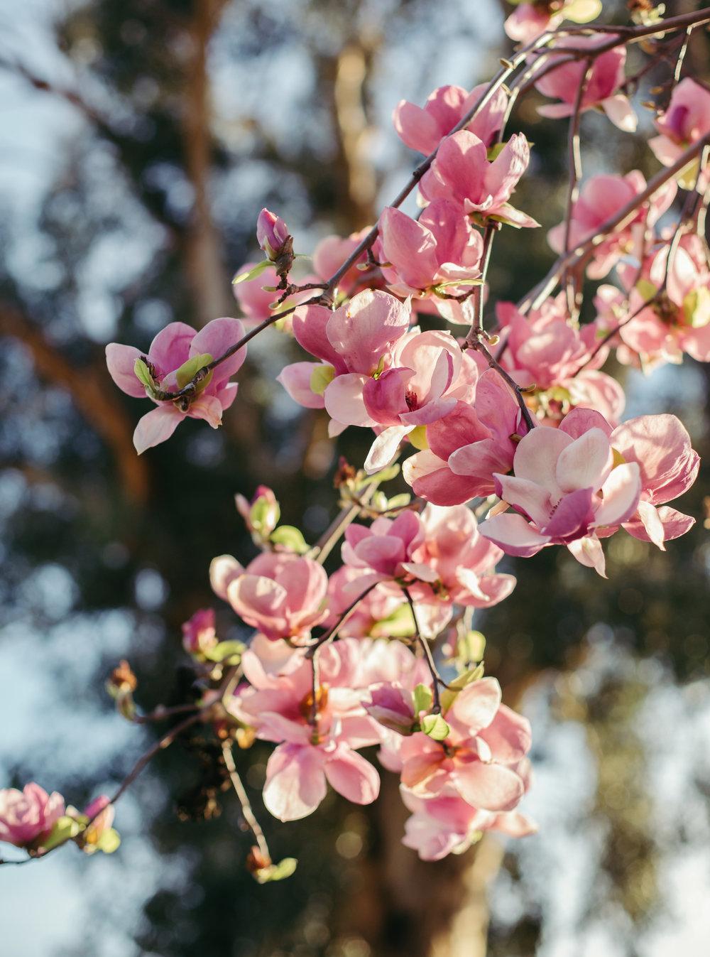Heather Bullard | Flowering Branches