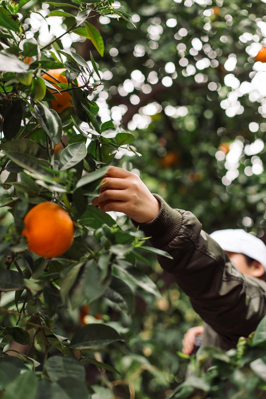 Heather Bullard | Fresh Picked Orange